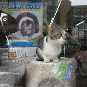 Katze getigert im Schaufenster eines Tierbedarf-Shops