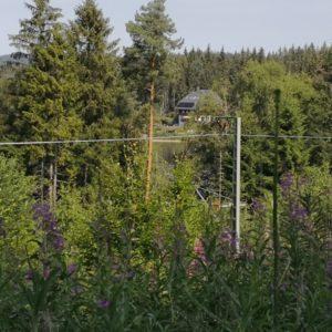 Blick von Waldweg erhöht durch die Bäume aufs Hotel