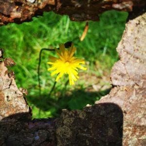 Gelbe Blume mit Rahmen aus Rinde