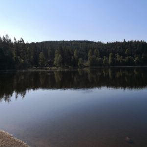 Blick auf Schwarzwald mit See im Vordergrund mit Spiegelung der Bäume auf dem Wasser