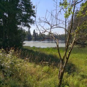 Blick vom Naturschutzgebiet auf den Schlüchtsee mit Seerosen, im Vordergrund Äste vom Baum