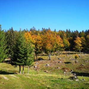 Blick in den rot-gelb gefärbten Herbstwald