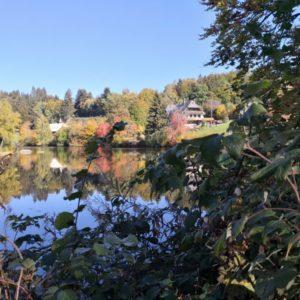 Blick zum Klosterweiher durch Gebüsch
