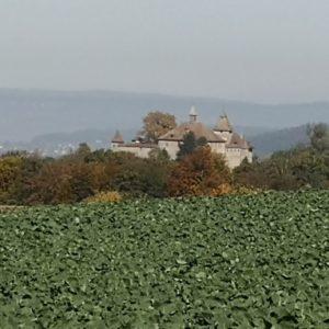 Blick zur Kyburg aus Entfernung, im Vordergrund Ruebenfeld in grün