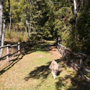Weg ins Naturschutzgebiet mit Viktor im Bild