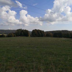 Blick auf Baumkette bei blauem Himmel mit Cumuluswolken