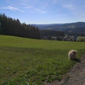 Viktor schnüffelnd im grünen Gras